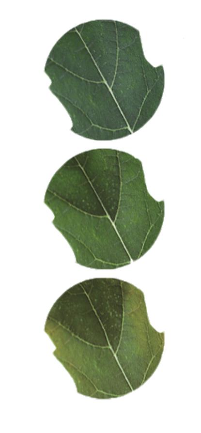 fosfor-en-het-belang-voor-jouw-plant-2