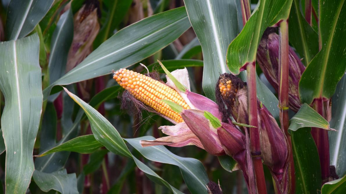 Fosfor (P) en het belang voor jouw plant