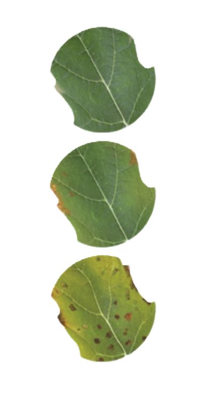 uw-plant-vraagt-om-kaliumk-waarom-2