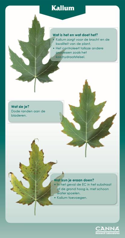 uw-plant-vraagt-om-kaliumk-waarom