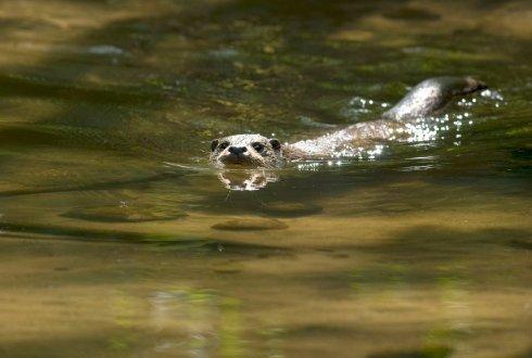 otter-schoon-water