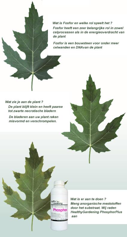 Forsfor en het belang voor jouw plant