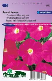 Petunia Rose of Heaven