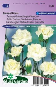 Tuinanjer Chabaud hoge dubbele Jeanne Dionis