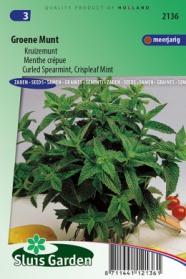 Groene Munt / Kruizemunt (Mentha spicata crispa)