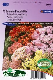 Duizendblad Summer Pastels F2 mix (Achillea)
