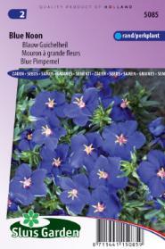 Blauw Guichelheil Blue Noon