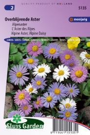 Aster overblijvende gemengd (Alpenaster)