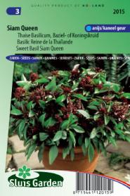 Basilicum Siam Queen (Ocimum Basilicum)