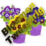 Bloemen Tweejarig
