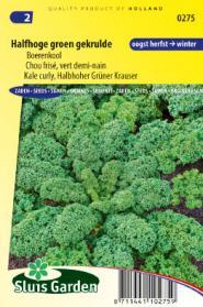 Boerenkool Halfhoge groen gekrulde