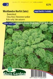 Boerenkool Westlandse Herfst (late varieteit)