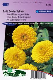 Goudsbloem Ball's Golden Yellow