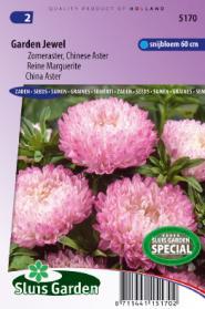 Aster Garden Jewel Rose (Zomeraster)