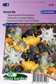 Cucurbita Shenot Crown of Thorns (Doornenkronen)