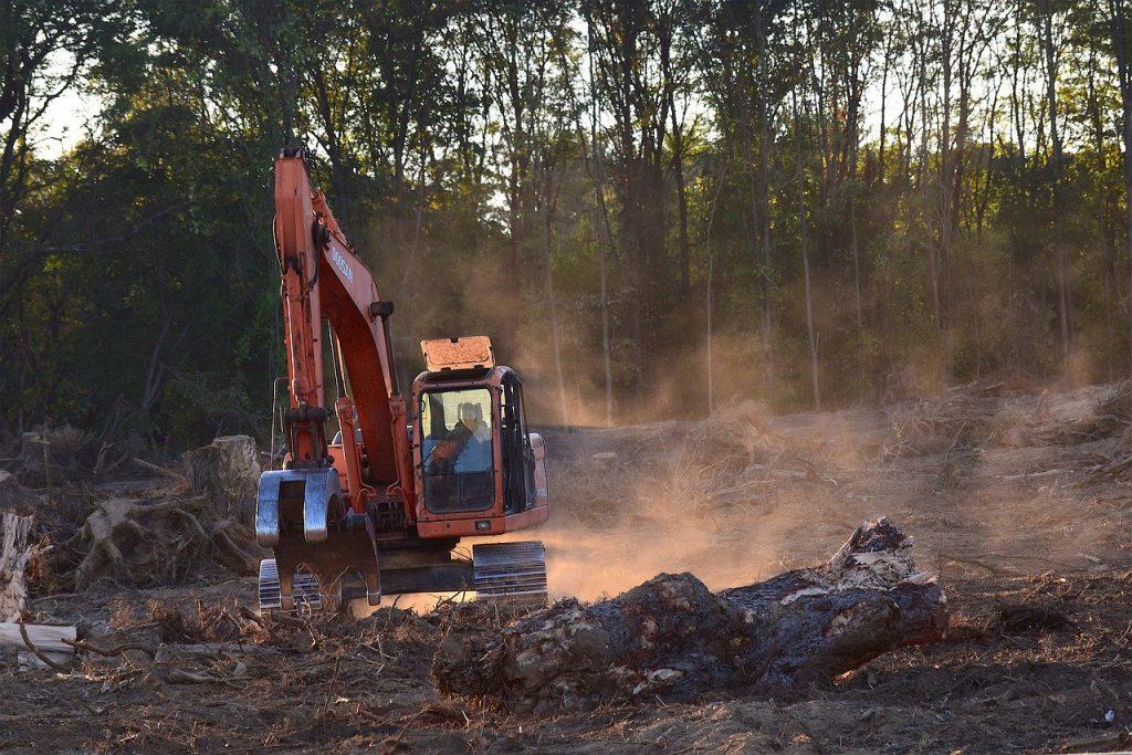 Wereldwijde Ontbossing
