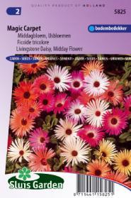 IJsbloem Magic Carpet mix (Middagbloem)