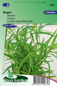 Dragon Russische (Artemisia dracunculus)