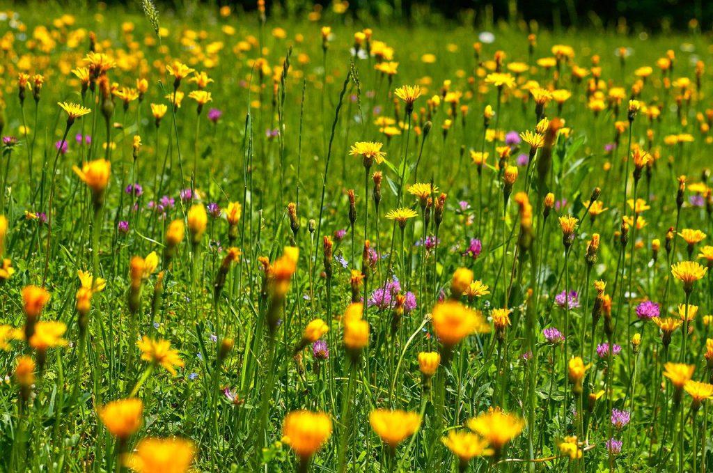 Biologische land en tuinbouw