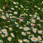 flowers-4265766_1280