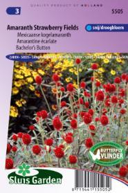 Kogelamaranth Strawberry fields (Gomphrena)