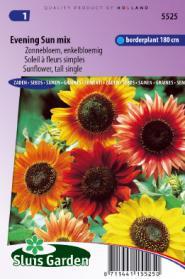 Zonnebloem Avondzon mix (Helianthus)