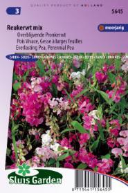 Reukerwt overblijvende mix (Lathyrus)