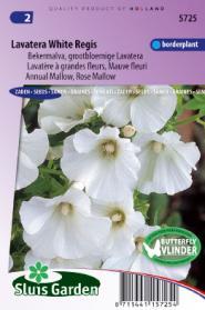 Lavatera White Regis (Bekermalva)