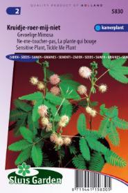 Kruidje-Roer-Mij-Niet (Mimosa)