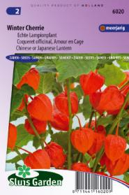 Lampionplant Winter Cherrie (Physalis)
