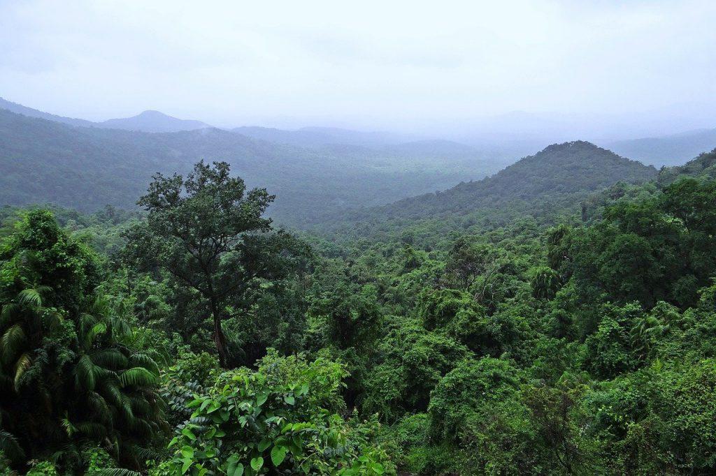 Regenwoud en ontbossing