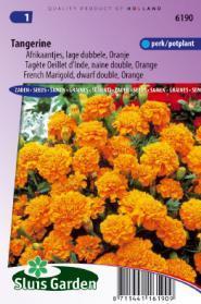 Afrikaan Tangerine