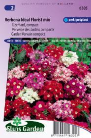 Verbena Ideal Florist mix
