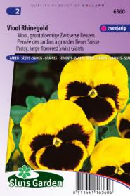 Viool Zwitserse Reuzen Rhinegold