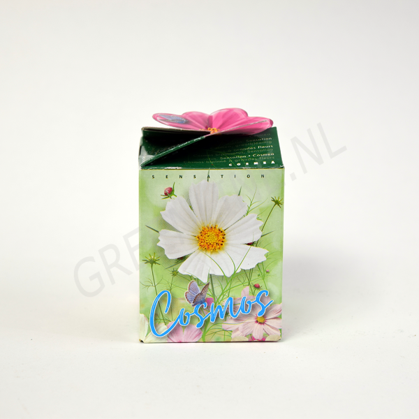 flower-gift-cosmos-wit-nl