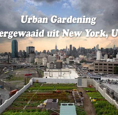 Urban Gardening neemt in omvang toe